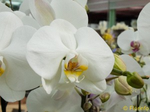 Foto Pianta